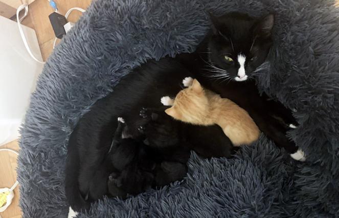Callie with her own kittens with orange foster kitten Arnie