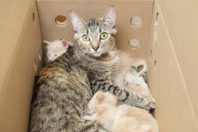 Izabelle and her babies