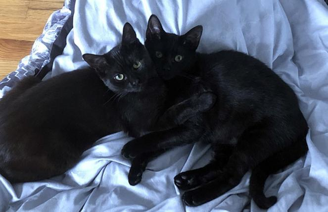 Charlie and Roxy the kittens adopted together, snuggled on a blue blanket