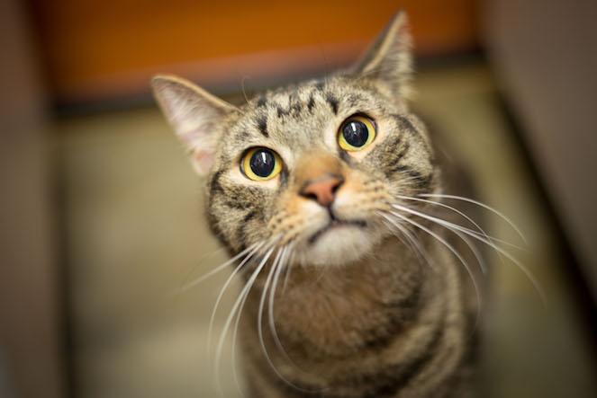 Kitty Care Resident, Taz