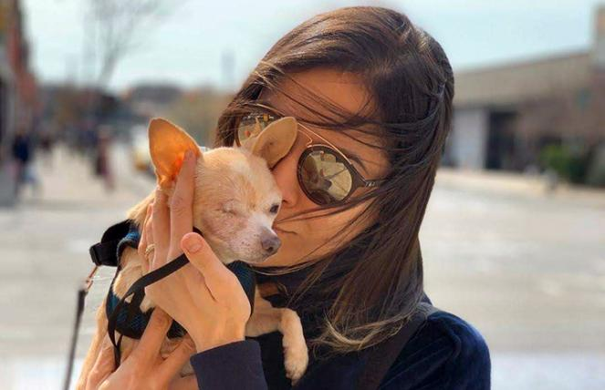 Woman holding a small, tan one-eyed Chihuahua-type dog she's fostering