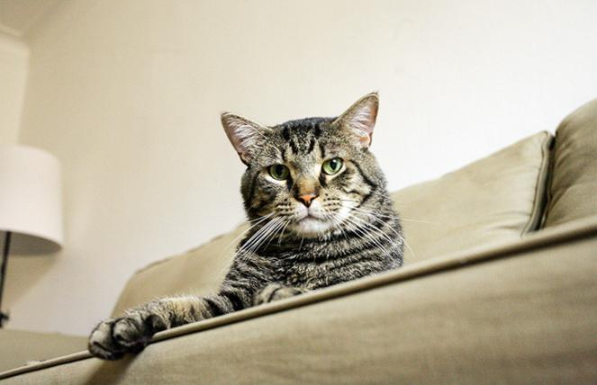 Lord Toranga the cat lying on the edge of a tan couch
