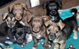 Litter of six adorable puppies all together on a blanket