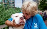 Best Friends New York volunteer Kath Posekel kissing a white pit bull dog