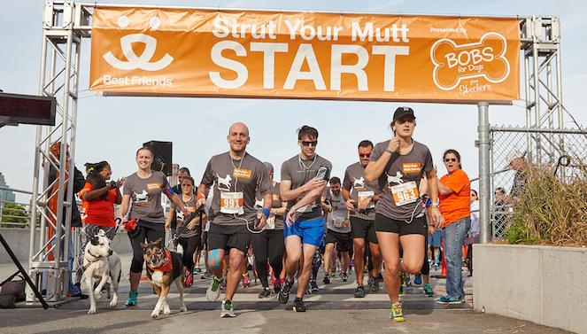 Strut Your Mutt event