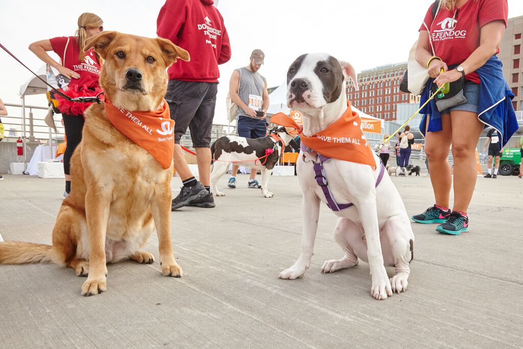 Dogs wearing Best Friends' Save Them All bandanas at Strut Your Mutt