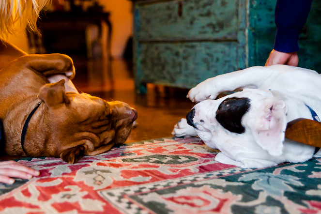Two dogs lying on the floor together