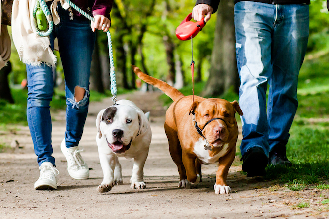 Two dogs walking on a leash together