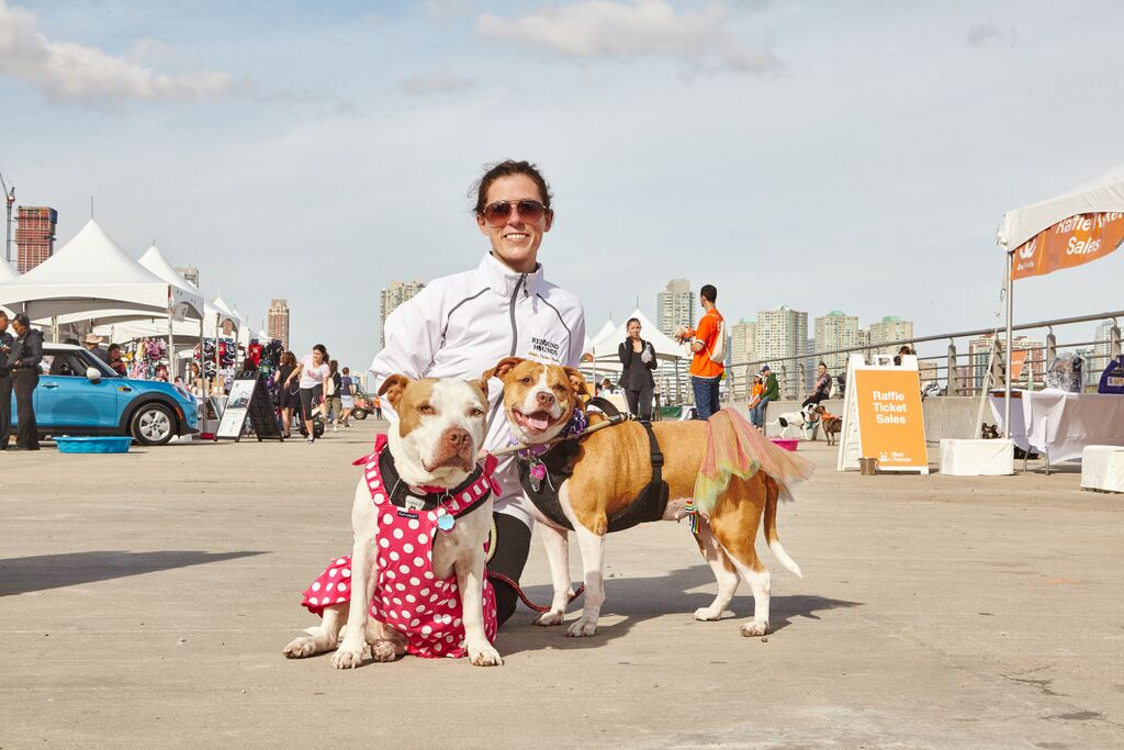 Woman with two pit-bull-type dogs at Strut Your Mutt
